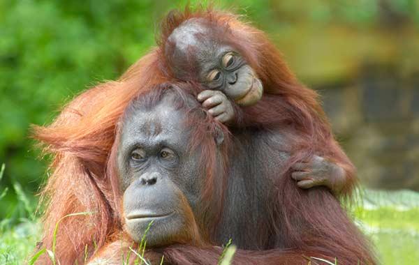 Cincinnati Zoo at Sharonville